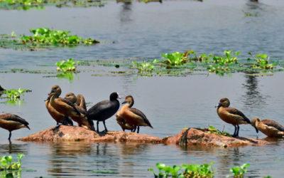 World Wetlands Day 2020 Celebrated in Guwahati