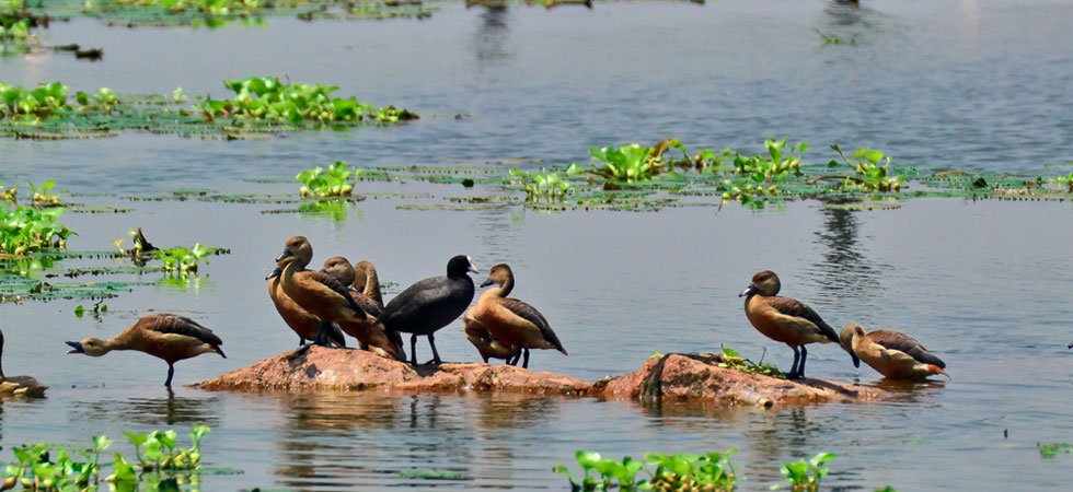 World Wetlands Day 2020 Celebrated in Guwahati
