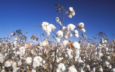 Partnership to Advance Sustainable Outcomes for Cotton by Field to Market and US Cotton Trust