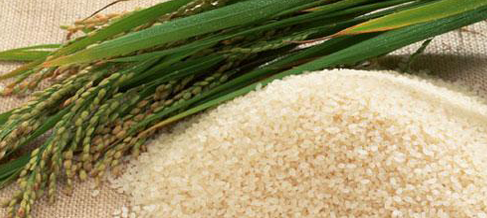 Magic rice or Komal Saul from India's state of Assam which needs no cooking