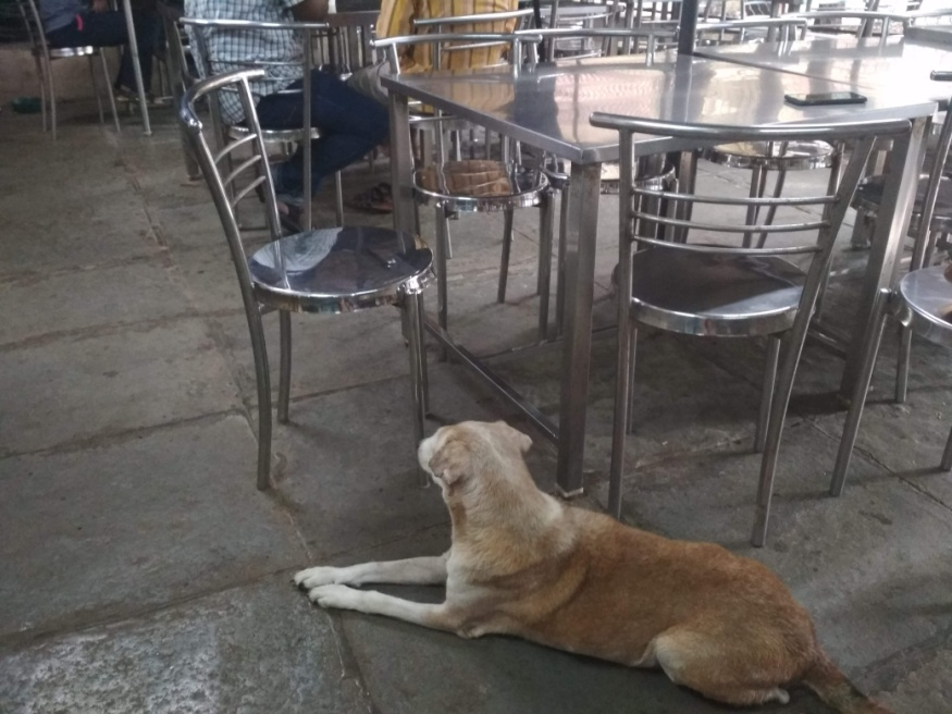Figure 7: A dog, one of the regular visitors in the canteen in TISS' main campus