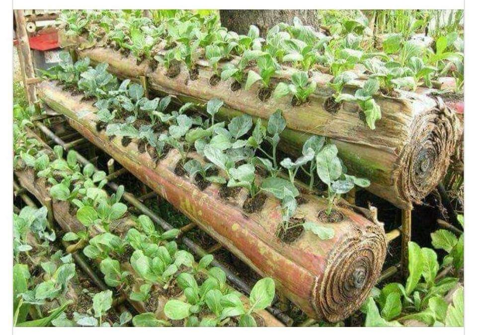 Use Banana Stems for Organic Farming: Innovations in Agriculture