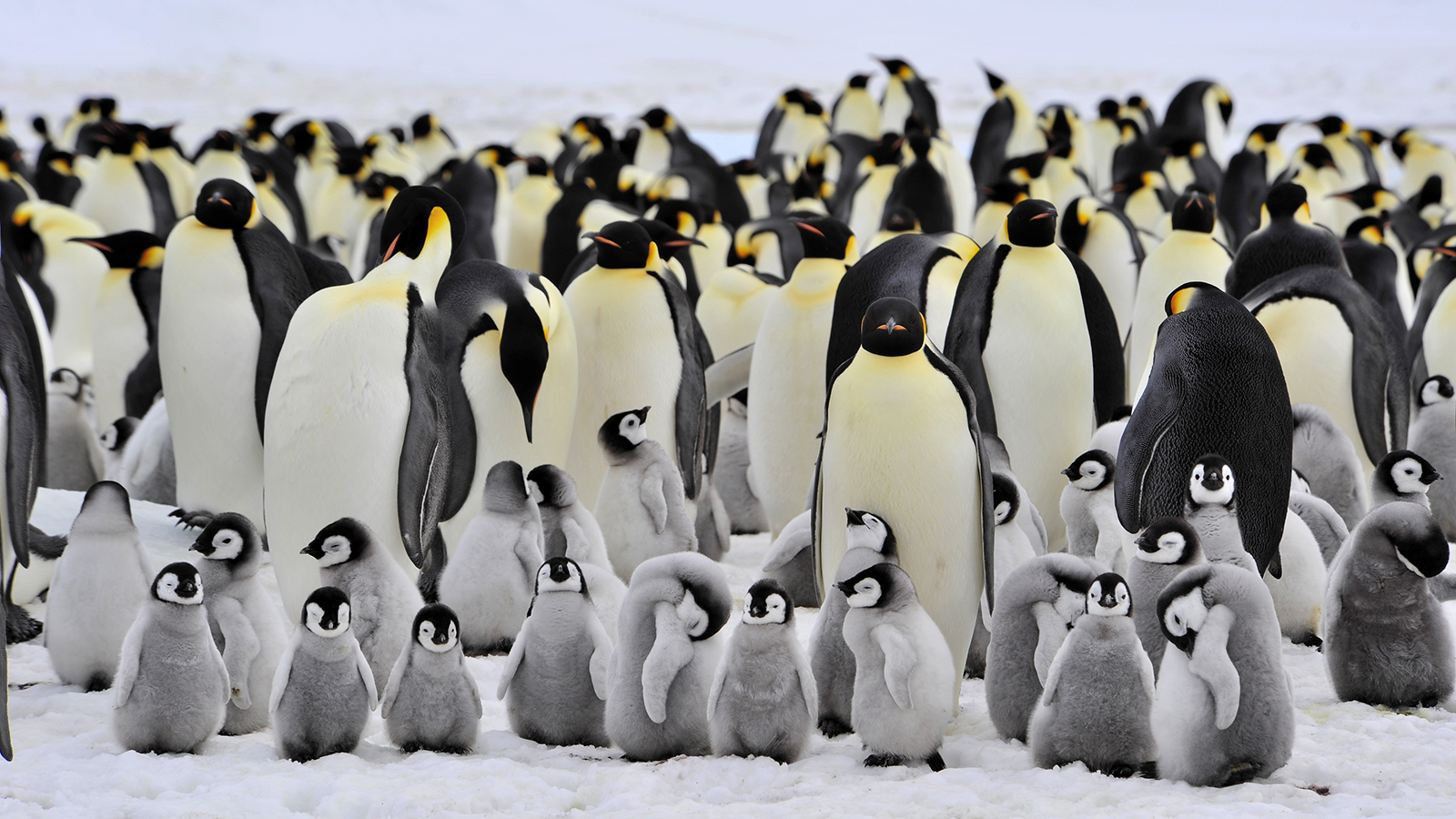 Penguin Awareness Day: Save the penguins from climate change