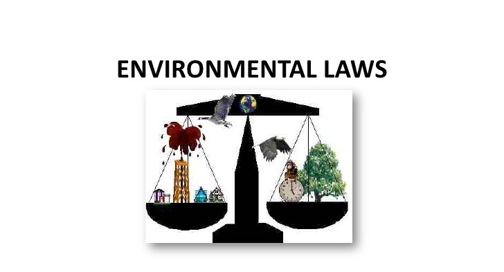 Environment Laws Have Benefited More from Supreme Court than Govt