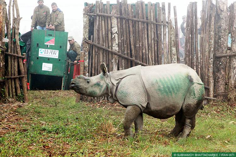 Rhino poaching in Assam's Kaziranga Park bad news for wildlife conservation